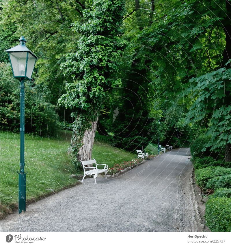 In the spa gardens Plant Summer Tree Bushes Park Esthetic Beautiful Gray Green Lanes & trails Park bench Empty Loneliness Perspective Calm Groomed Colour photo