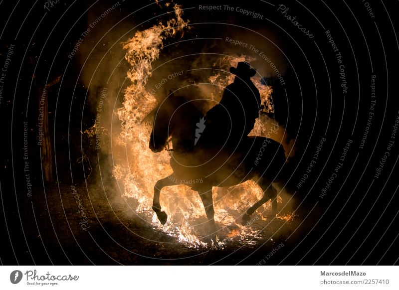 Man jumping with horse over a fire Vacation & Travel Tourism Trip Adventure Feasts & Celebrations Ride Human being Adults 1 Culture Animal Horse Jump Dangerous