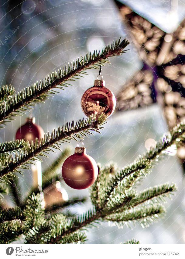 Christmas is long over now... Christmas & Advent Green Star (Symbol) Christmas tree Christmas decoration Christmas star Coniferous trees Fir needle