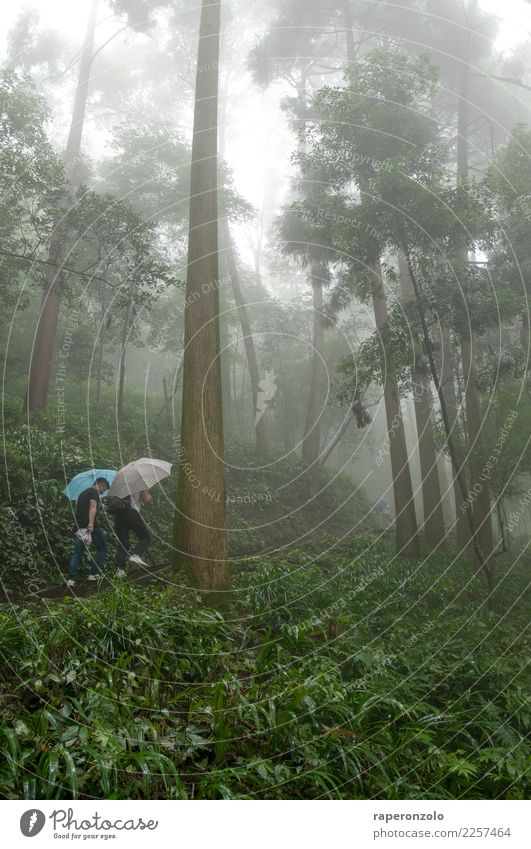 Two men with umbrellas, lots of green, a forest, fog. Vacation & Travel Trip Human being Masculine Man Adults Nature Landscape Summer Bad weather Fog Rain Tree