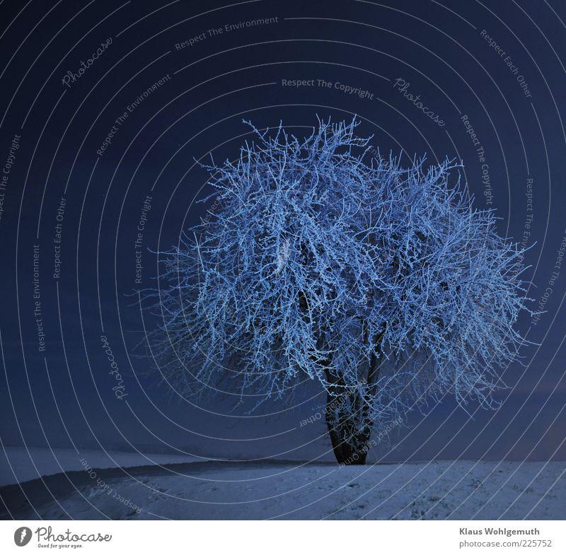 Sky White Blue Tree Winter Calm Loneliness Snow Horizon Stars Romance Hill Fantastic Idyll Freeze Night