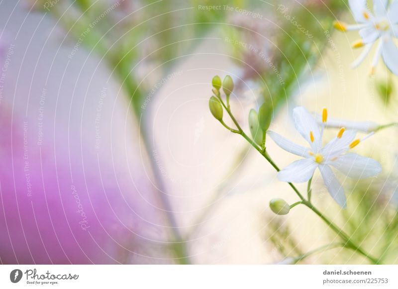 another girl's photo Plant Leaf Blossom Bright Green Violet White Summer Spring Flower Detail Macro (Extreme close-up) Copy Space left Copy Space top