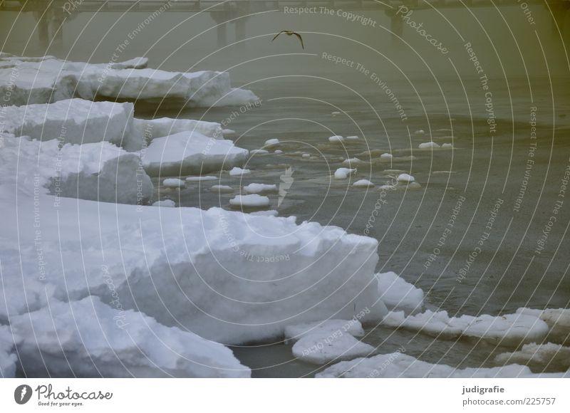 Nature Water Beach Ocean Winter Cold Dark Snow Environment Landscape Coast Moody Weather Bird Ice Fly