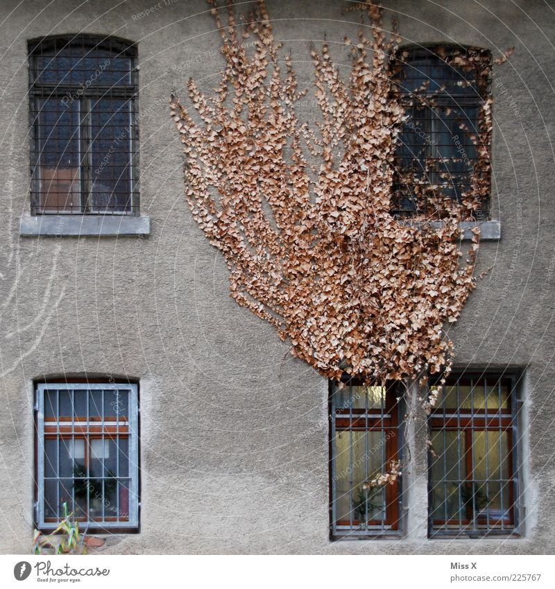 Old Plant Leaf Winter House (Residential Structure) Dark Wall (building) Window Autumn Wall (barrier) Brown Dirty Facade Growth Gloomy Change