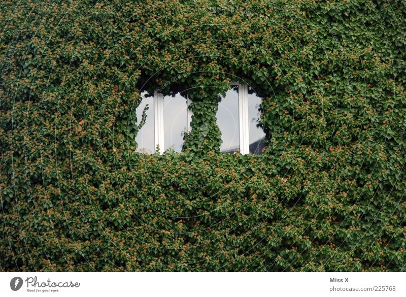 [] [] House (Residential Structure) Plant Ivy Leaf Wall (barrier) Wall (building) Facade Window Growth Green Nature Tendril Colour photo Exterior shot Pattern