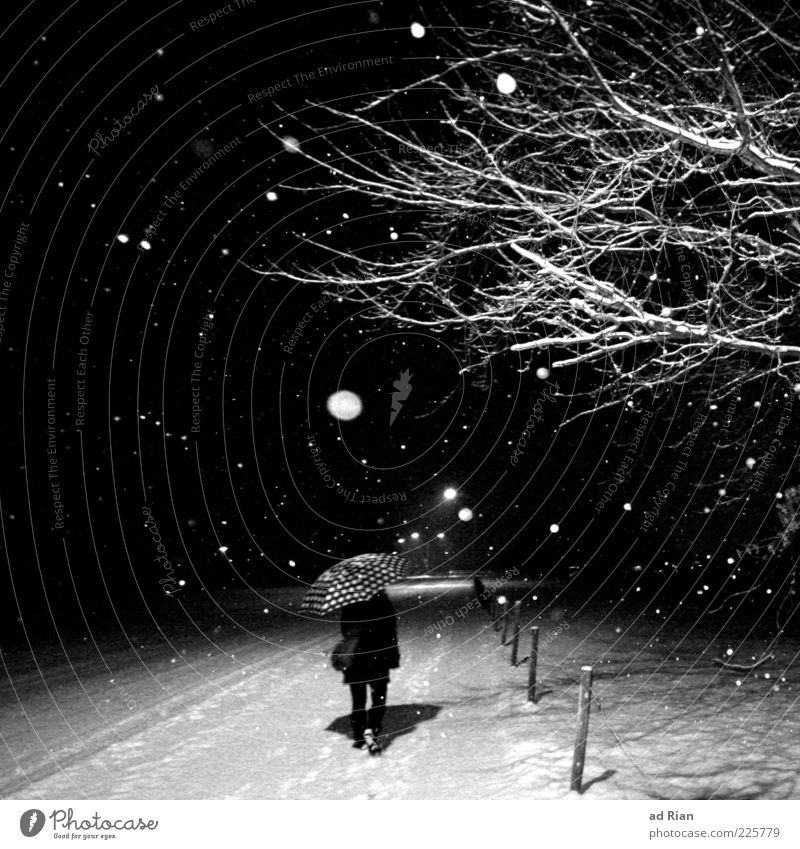 on the right track. Going 1 Human being Nature Ice Frost Snow Snowfall Tree Branch Contentment Expectation Advancement Black & white photo Night Flash photo