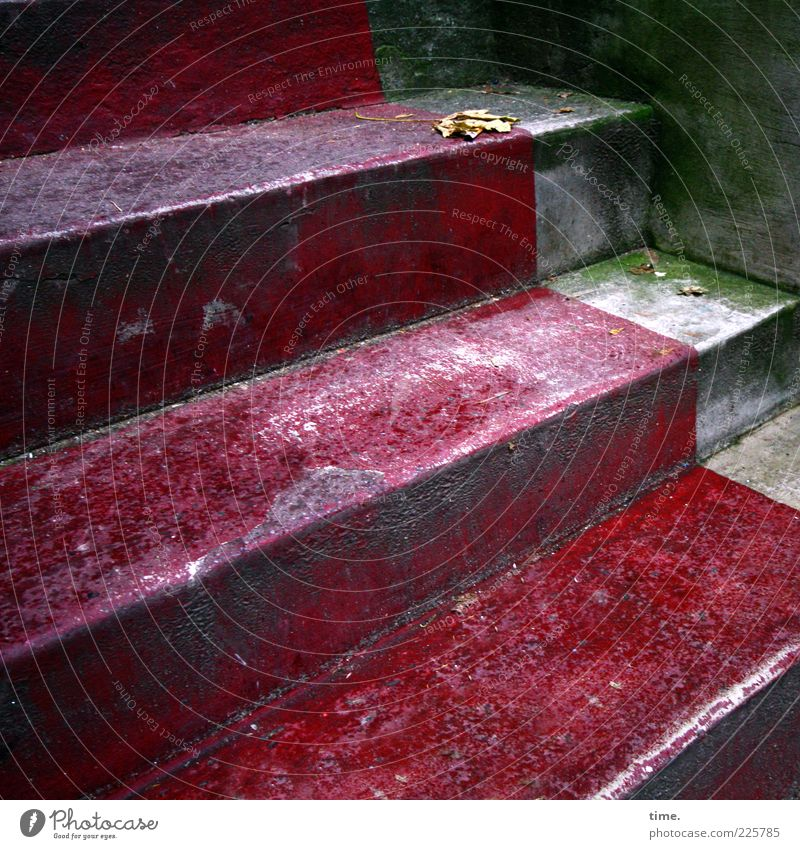 Old Green Red Leaf Wall (barrier) Gray Stairs Perspective Concrete Corner Floor covering Moss Entrance Diagonal Mold Fraud