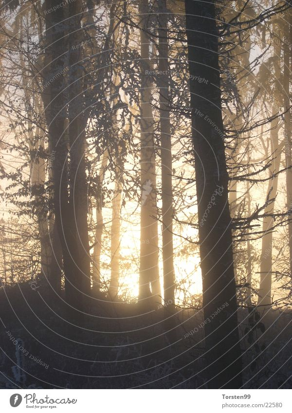 Forest Fog Frost Branch Winter forest Afternoon sun