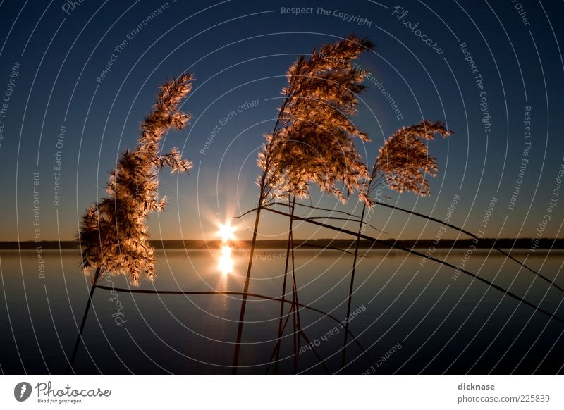 Sky Nature Water Plant Winter Calm Environment Landscape Lake Horizon Bushes Romance Illuminate Lakeside Beautiful weather Cloudless sky