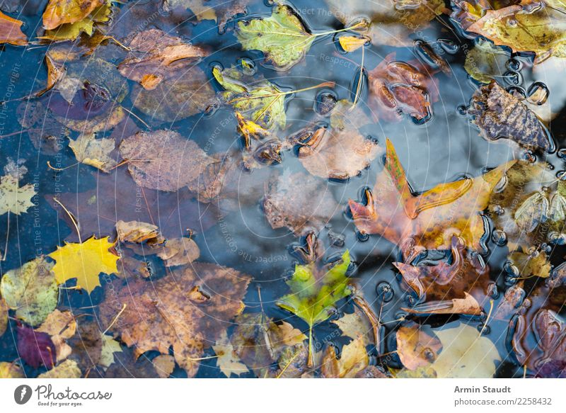 autumn puddle Design Healthy Environment Nature Water Autumn Winter Rain Plant Leaf Park Faded To dry up Brown Yellow Green Puddle Wet Autumn leaves Transience