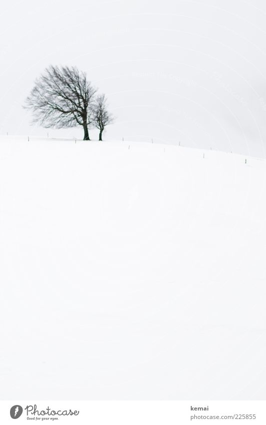Famous Beech Environment Nature Landscape Plant Sky Winter Climate Bad weather Ice Frost Snow Tree Beech tree Meadow Field Hill Schauinsland Cold Gloomy Black