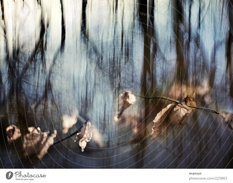 confusing Nature Autumn Tree Leaf Twigs and branches Forest Dark Cold Surrealism Colour photo Exterior shot Abstract Day Twilight Light Shadow Reflection