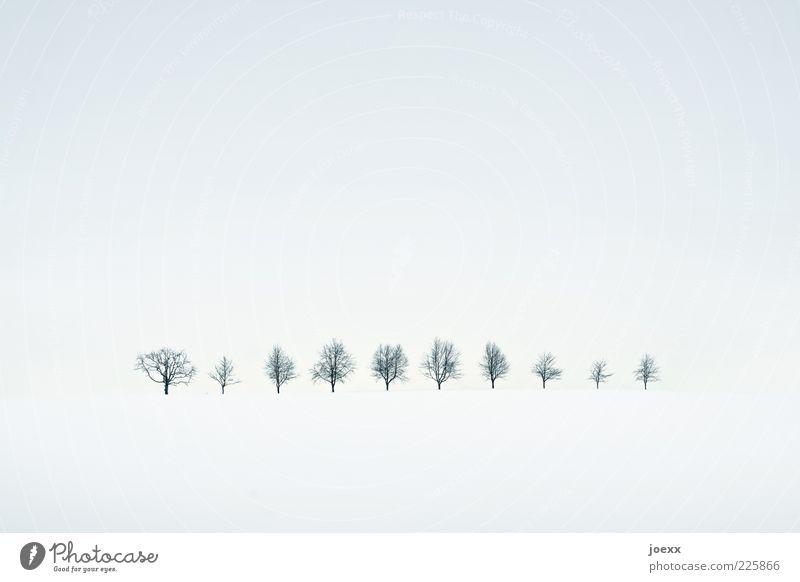 Nature White Tree Calm Winter Black Yellow Cold Snow Landscape Gray Idyll Row High-key Winter mood Row of trees