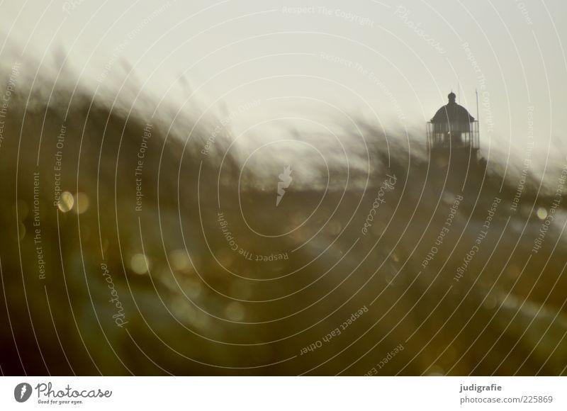 Nature Ocean Environment Landscape Grass Coast Moody Wind Climate Wild Natural Baltic Sea Lighthouse Navigation Darss