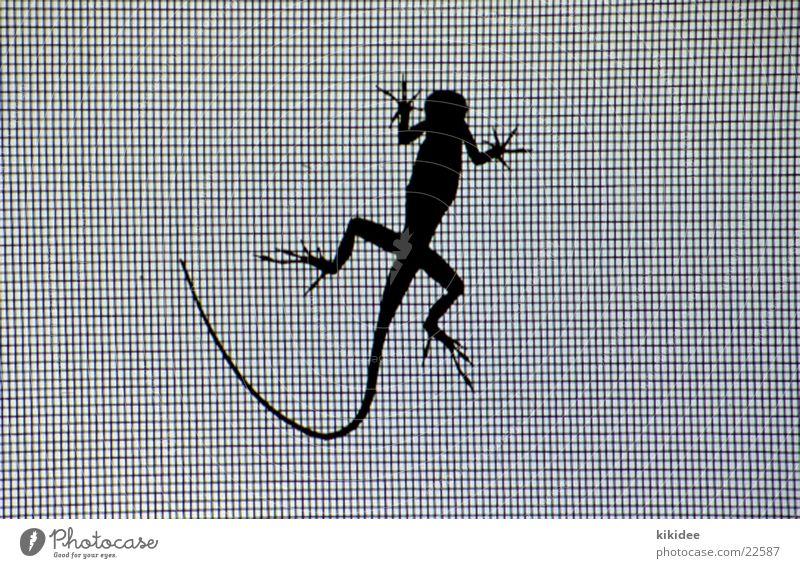 lizard Saurians Grating Silhouette Net