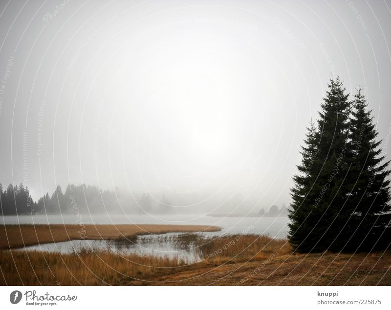 Nature Water Tree Plant Winter Forest Autumn Landscape Lake Weather Fog Switzerland Bay Lakeside Edge of the forest Clump of trees