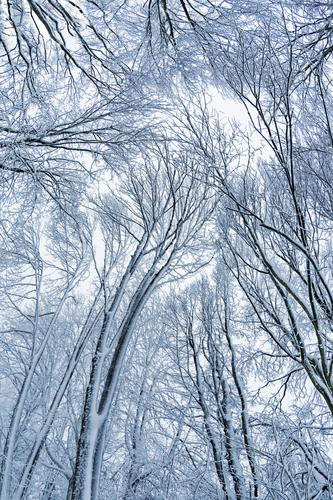 Sky Nature White Tree Winter Forest Environment Snow Snowfall Ice Frost Silver Bad weather Agricultural crop