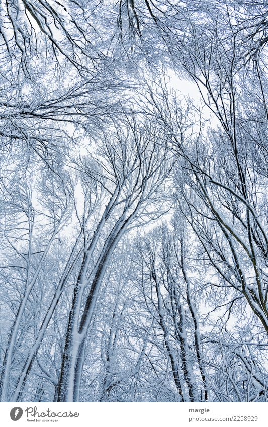Skystorm, high winter trees Environment Nature Plant Animal Winter Bad weather Ice Frost Snow Snowfall Tree Agricultural crop Forest Silver White Sadness