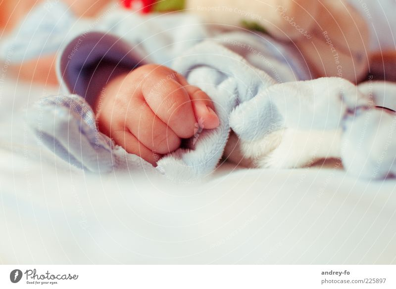 Baby Hand Child Toddler Fingers 0 - 12 months 1 - 3 years Small Emotions Warm-heartedness Happy Idyll Infancy Parenting Birth Children`s hand Colour photo