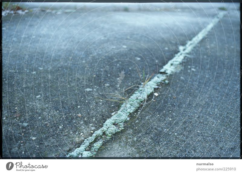 Nature Green Plant Winter Cold Environment Grass Gray Lanes & trails Moody Ice Concrete Floor covering Gloomy Frost Asphalt
