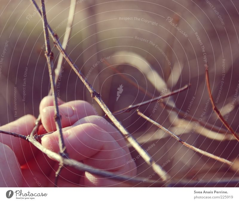 branch of doubt. Young woman Youth (Young adults) Hand Fingers 1 Human being Environment Nature Plant Tree Branch Beautiful Soft Pink Contentment
