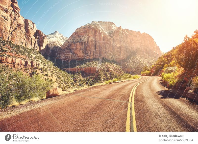 Scenic road at sunset, Zion National Park, USA. Nature Vacation & Travel Summer Beautiful Landscape Sun Mountain Street Lanes & trails Freedom Rock Trip