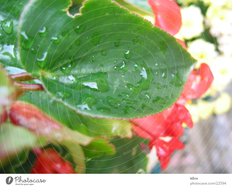 Nature Water Leaf
