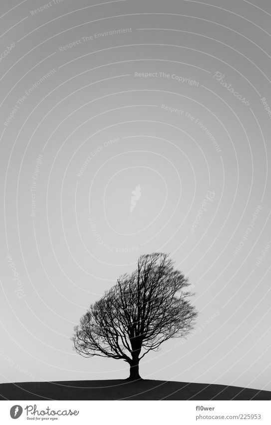 _-|-_ Hill Tree Sky Winter 1 Human being Nature Landscape Plant Air Cloudless sky Autumn Loneliness Deciduous tree Black & white photo Exterior shot Deserted