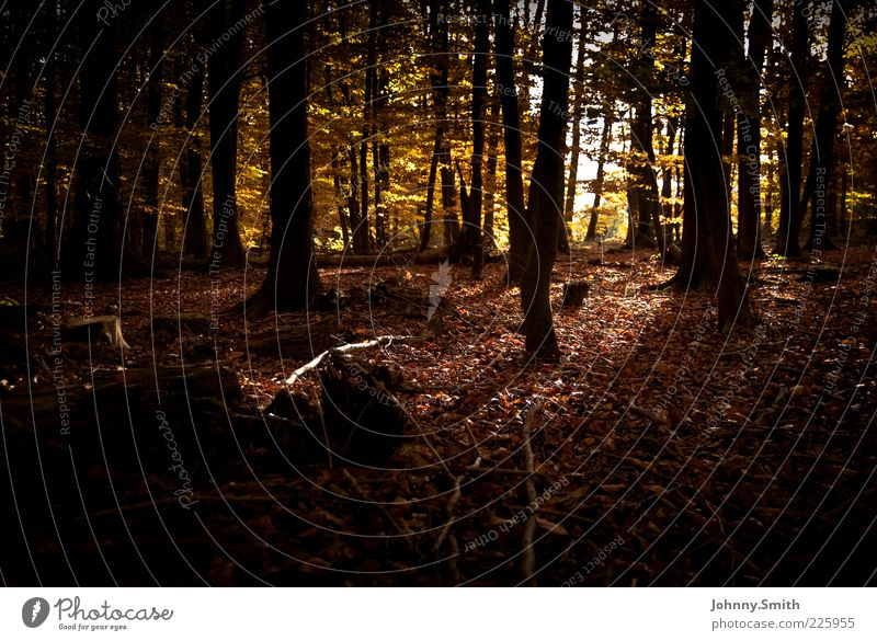 Nature Tree Forest Dark Autumn Environment Authentic Autumnal