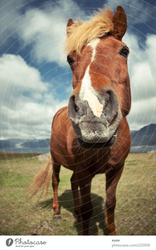 Sky Nature Clouds Far-off places Animal Meadow Landscape Moody Funny Wind Wait Esthetic Wild Natural Stand Horse