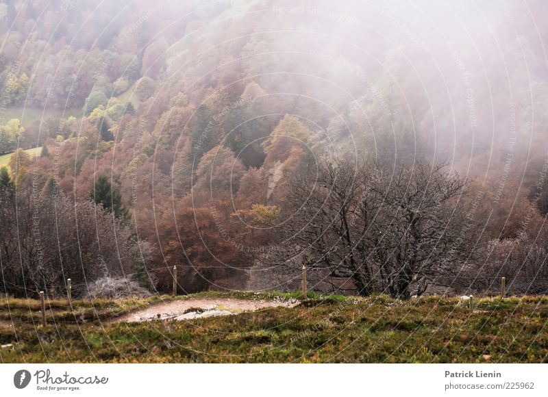 Nature Green Tree Plant Forest Cold Dark Autumn Mountain Environment Landscape Lanes & trails Moody Weather Fog Hill