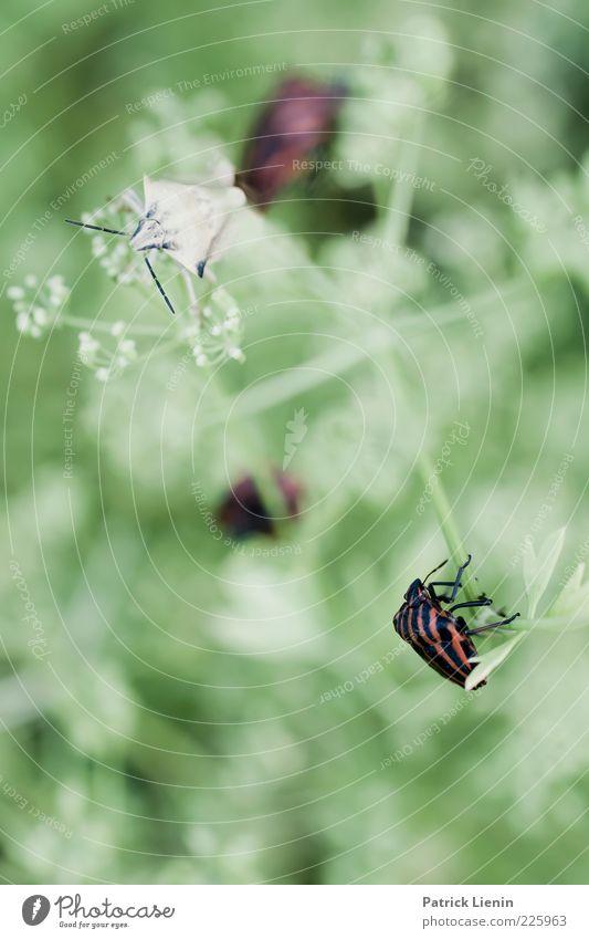 Nature Green Beautiful Plant Animal Environment Wait Sit Fresh Bushes Wild animal Soft Insect Beetle Crawl
