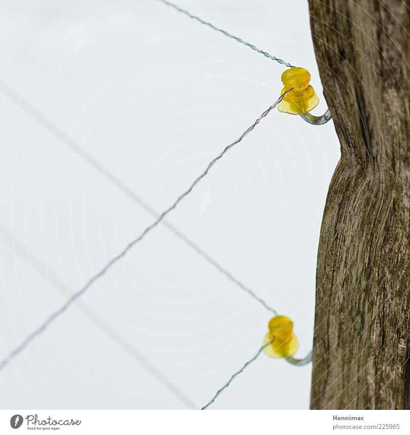 Test of courage. Rope Winter Wood Plastic Thin Brown Yellow White Protection Fear Respect Mistrust Energy Brave Curiosity Electricity Electronic Fence Wire