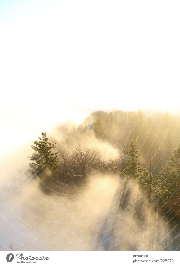 overfogged Winter Environment Nature Landscape Plant Clouds Sunlight Climate Weather Fog Tree Forest Bright Sea of fog Cloud forest Fog boundary Covering of fog