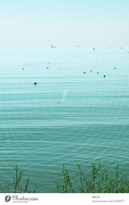 Nature Blue Water Summer Ocean Joy Calm Far-off places Relaxation Environment Landscape Grass Coast Lake Watercraft Waves