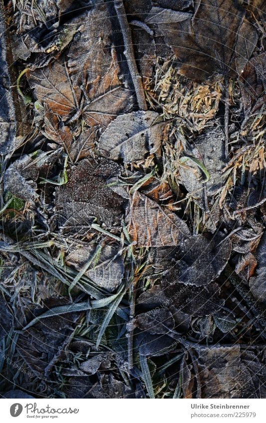 Leaf Winter Cold Meadow Dark Autumn Grass Ice Earth Natural Ground Frost Frozen Mature Shriveled Copy Space