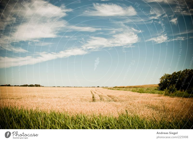 Sky Nature Green Blue Summer Clouds Loneliness Far-off places Yellow Environment Landscape Grass Bright Contentment Field Horizon
