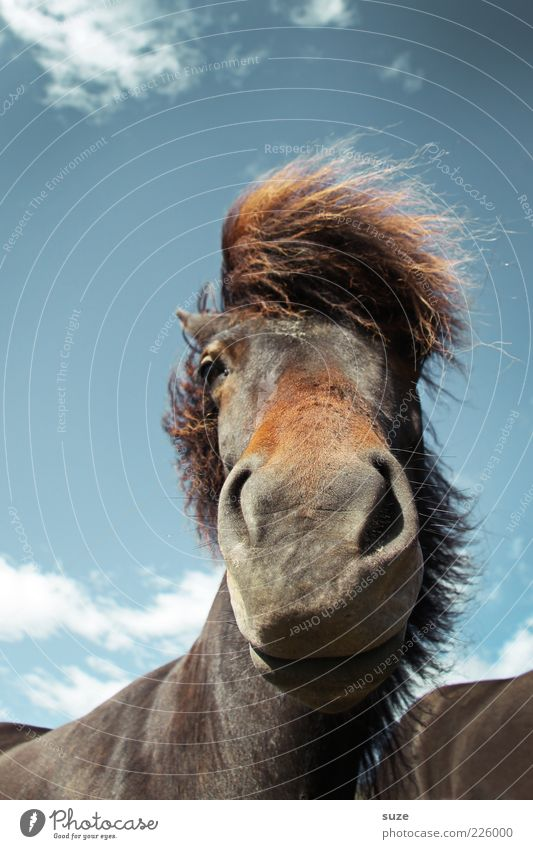 Sky Nature Clouds Animal Moody Funny Wind Wait Esthetic Wild Natural Stand Horse Wild animal Cute Animal face