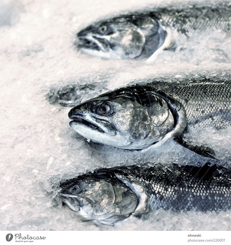 Animal Nutrition Death Head Food Ice Fish Fresh Fish Frost Frozen Delicious Fish eyes Scales Ice cube Salmon