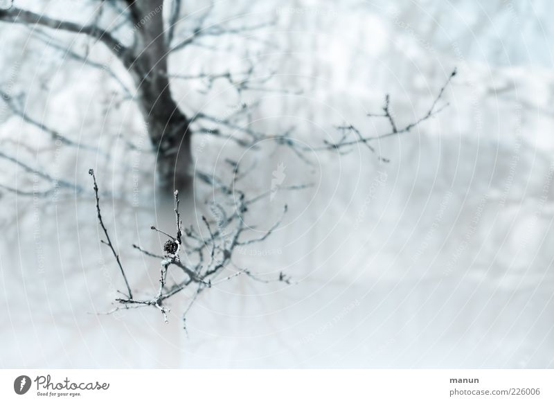 Nature Water Tree Winter Snow Rain Lake Wet Authentic Torrents of water Twigs and branches Plant Deluge Deluge Inundated