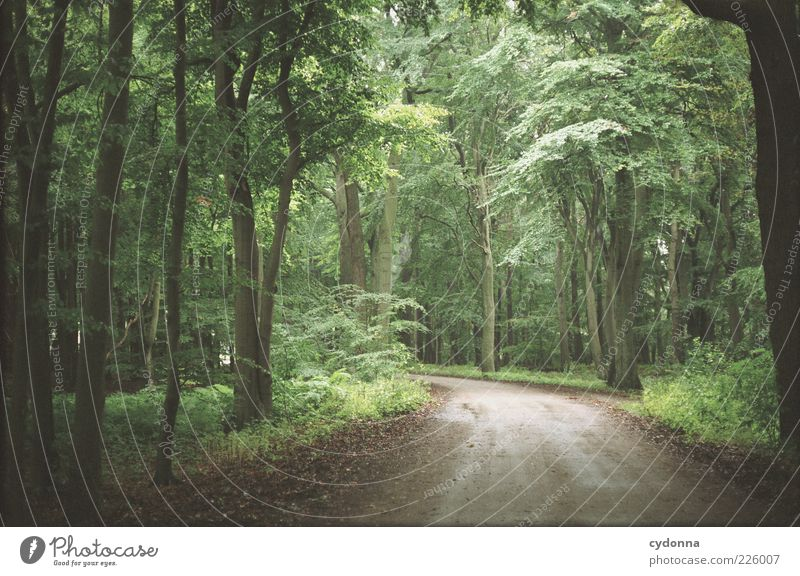 Nature Tree Leaf Calm Loneliness Far-off places Forest Life Freedom Environment Landscape Movement Lanes & trails Dream Contentment Time