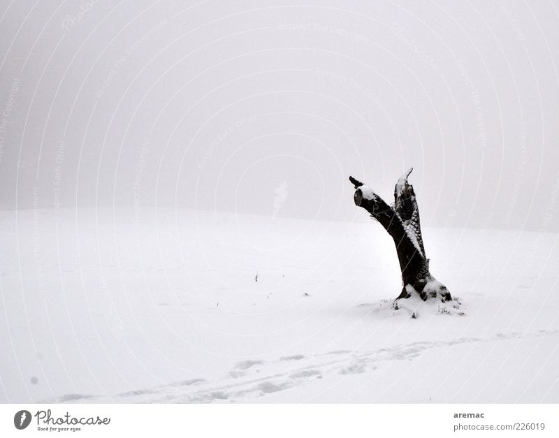 Nature Old White Tree Plant Calm Winter Loneliness Black Cold Snow Environment Landscape Emotions Weather Ice