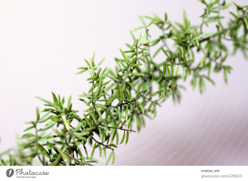 Nature Green Plant Leaf Bushes Branch Exotic Twig Thorny Tendril Foliage plant Pot plant Part of the plant