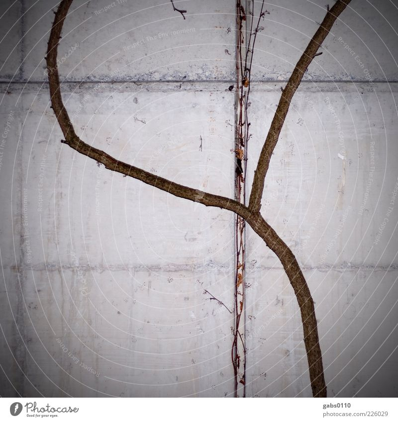 Nature VS Technology Environment Winter Plant Wall (barrier) Wall (building) Concrete Wood Growth Brown Gray Black White Flexible Crucifix Tendril Vignetting