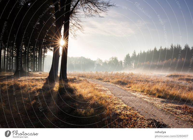 path in golden autumn sunny forest Sky Nature Beautiful Landscape Sun Tree Forest Street Autumn Lanes & trails Bright Hiking Fog Vantage point Seasons November