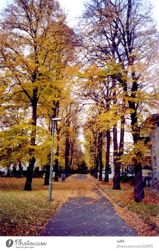 autumn roads Leaf Autumn Yellow Brown Avenue Cold Street Branch