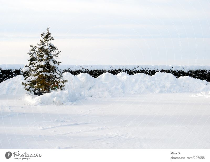 White Tree Loneliness Winter Cold Snow Garden Ice Frost Christmas tree Fir tree Hedge Pile of snow