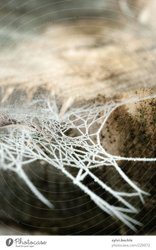 Nature White Tree Winter Loneliness Cold Environment Garden Park Brown Ice Climate Frost Frozen Tree trunk Spider's web