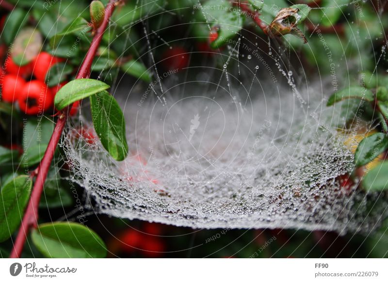 Off to the net Plant Drops of water Bushes Green White Spider's web Colour photo Exterior shot Deserted Day Blur Dew Rain Net Natural Nature Wet Damp