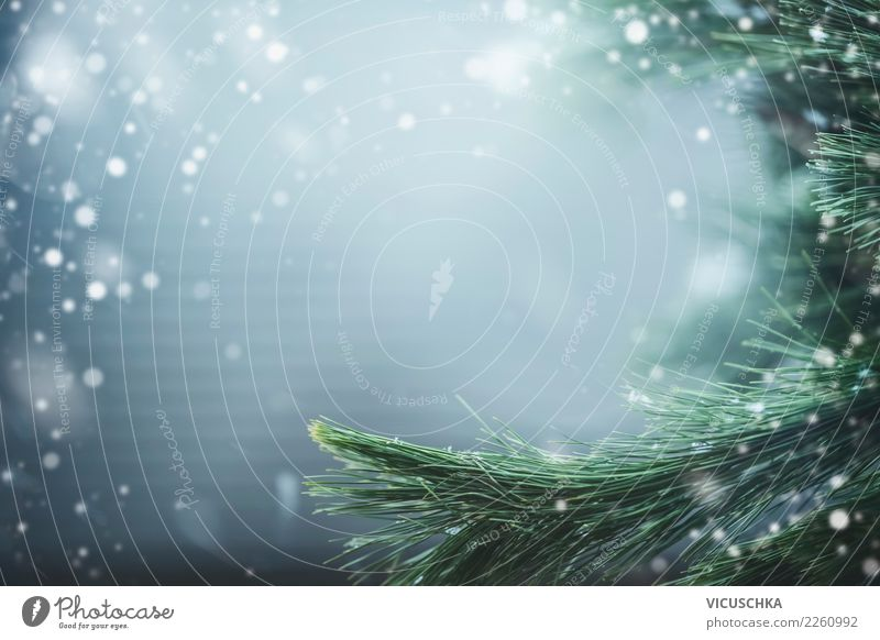 Winter nature background with fir branches Lifestyle Design Vacation & Travel Christmas & Advent Nature Landscape Beautiful weather Snow Plant
